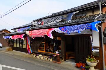 端午鯉のぼり写真(小).JPG